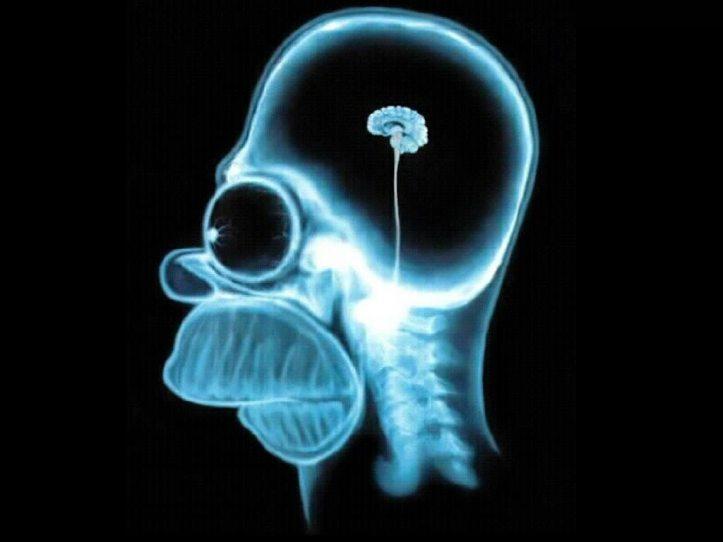 1233850636_wallpaper-brain